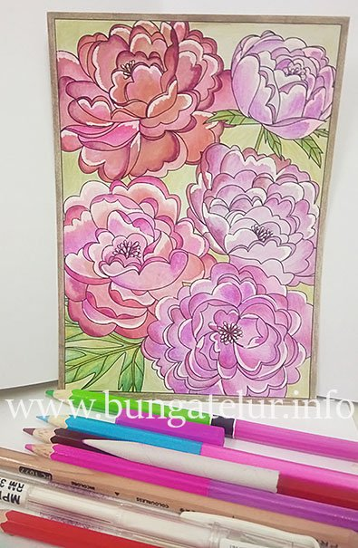 colleen-coloring-postcard-peonies